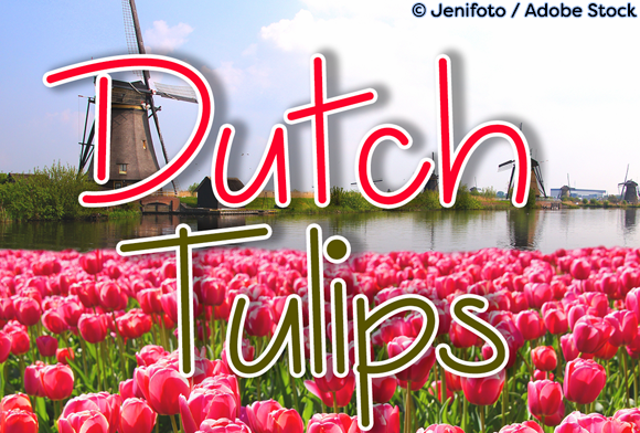 Print on Demand: Dutch Tulips Script & Handwritten Font By Misti