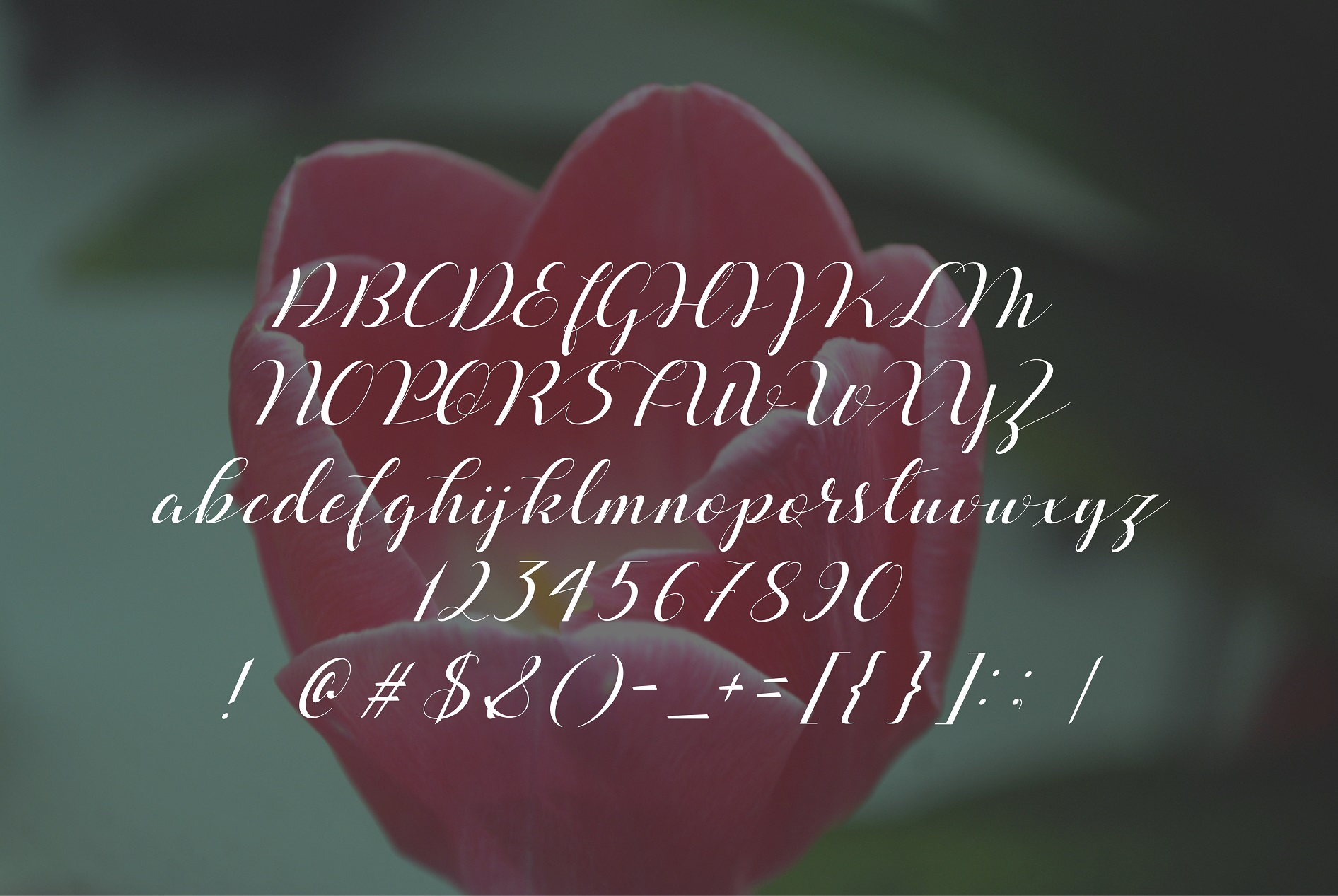 Print on Demand: Beloved Script & Handwritten Font By Spasova - Image 1