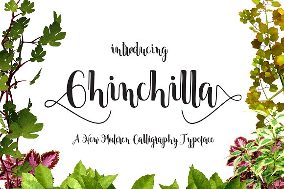 Print on Demand: Chinchilla Script & Handwritten Font By Danti
