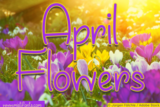 April Flowers by Misti