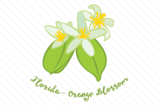 Florida-orange-blossom