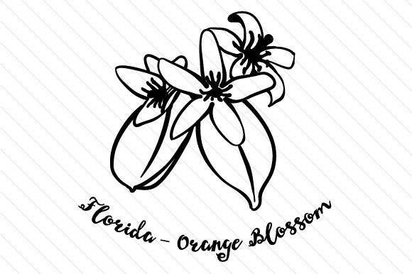 state flower florida orange blossom svg cut file by creative