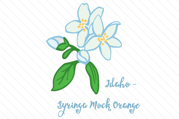State Flower: Idaho Syringa Mock Orange State Flowers Craft Cut File By Creative Fabrica Crafts