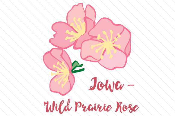 State Flower: Iowa Wild Prairie Rose State Flowers Craft Cut File By Creative Fabrica Crafts