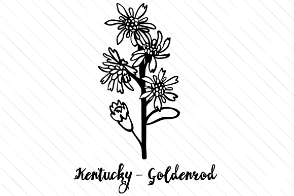 Download Free State Flower Kentucky Goldenrod Svg Cut File By Creative for Cricut Explore, Silhouette and other cutting machines.