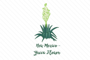 New-mexico-yucca-flower