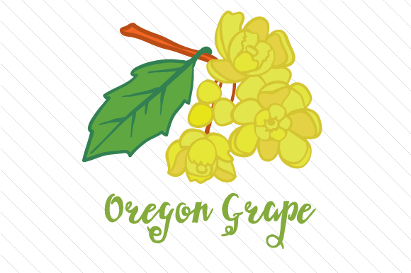 State Flower: Oregon Grape State Flowers Craft Cut File By Creative Fabrica Crafts