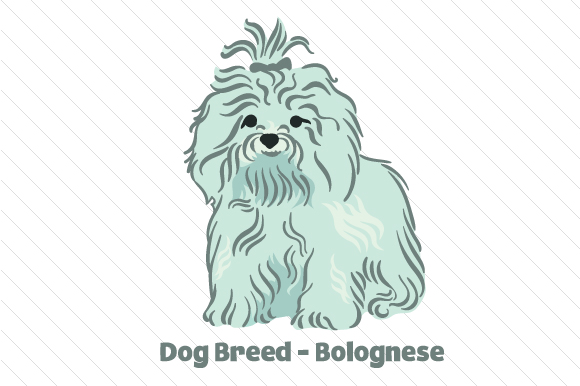 Dog Breed - Bolognese Dogs Craft Cut File By Creative Fabrica Crafts