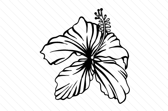 Download Free Hibiscus Flower Svg Cut File By Creative Fabrica Crafts Creative Fabrica for Cricut Explore, Silhouette and other cutting machines.