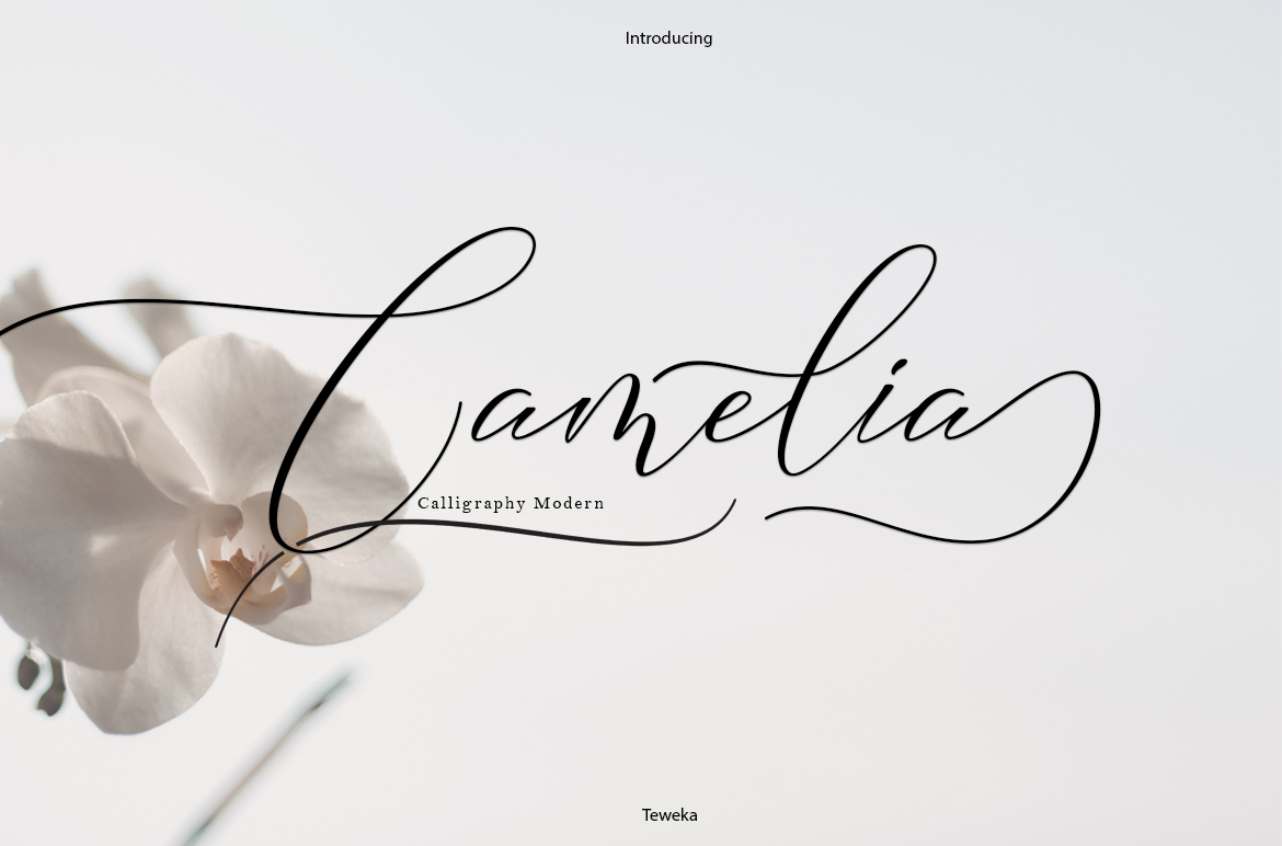 Print on Demand: Camelia Script & Handwritten Font By Teweka