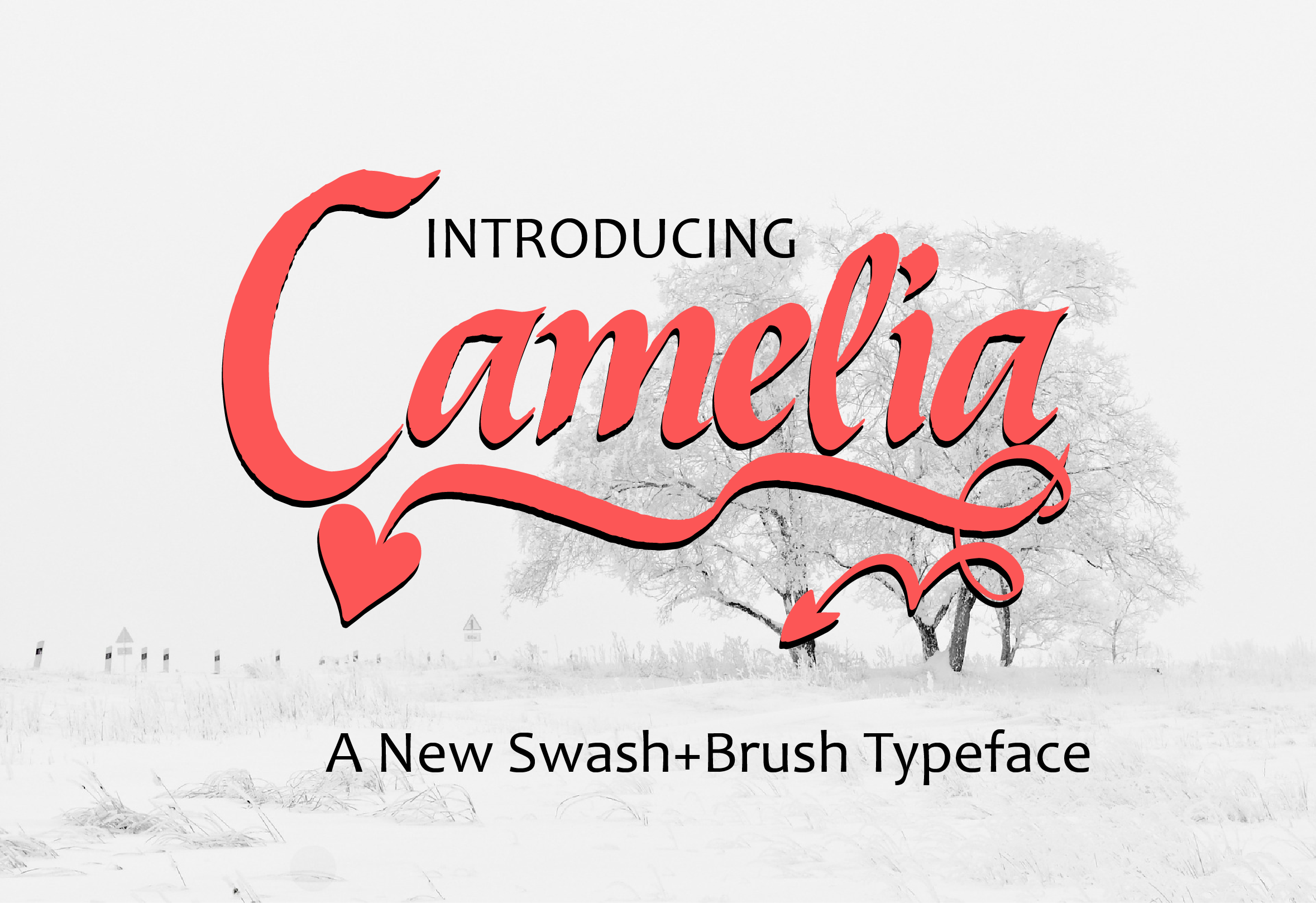Print on Demand: Camelia Script & Handwritten Font By ed.creative