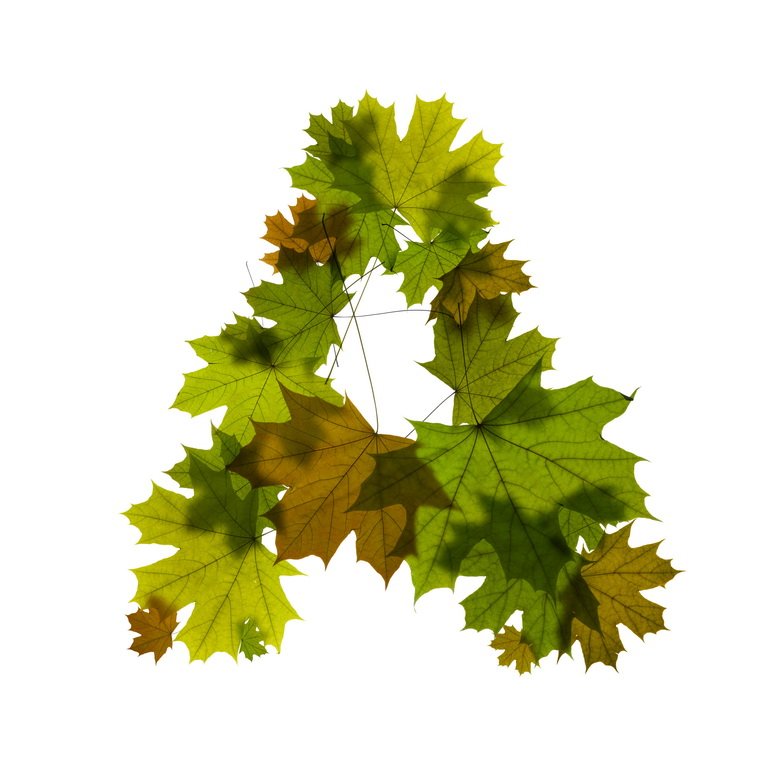 Print on Demand: Maple Leaves Alphabet Graphic Illustrations By NREY - Image 2