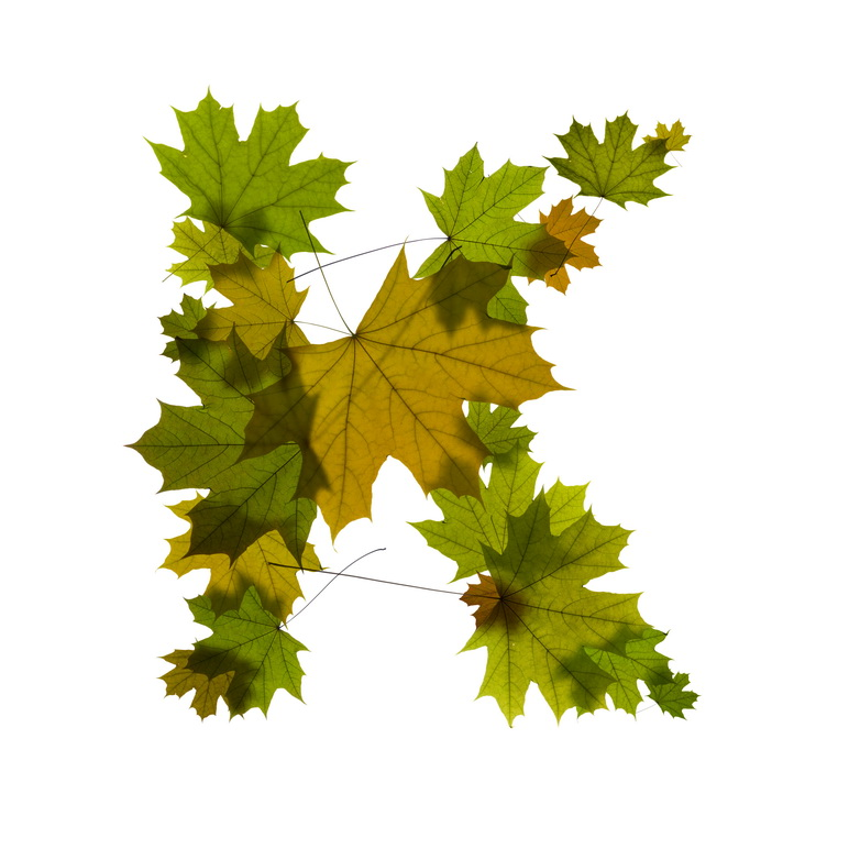 Print on Demand: Maple Leaves Alphabet Graphic Illustrations By NREY - Image 12