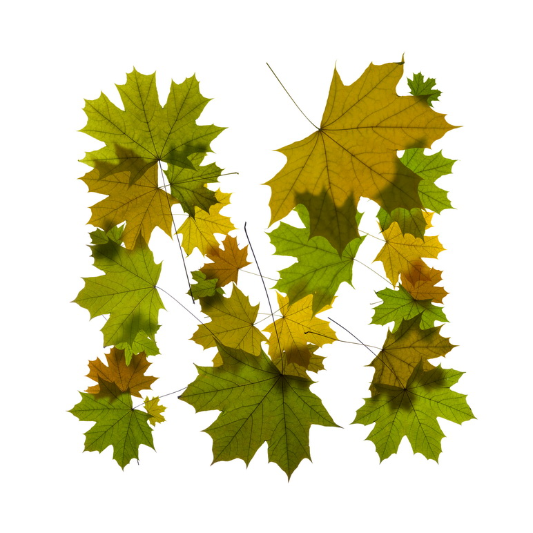 Print on Demand: Maple Leaves Alphabet Graphic Illustrations By NREY - Image 14