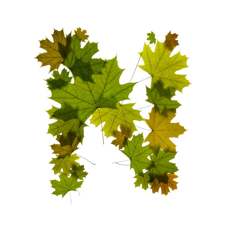 Print on Demand: Maple Leaves Alphabet Graphic Illustrations By NREY - Image 15