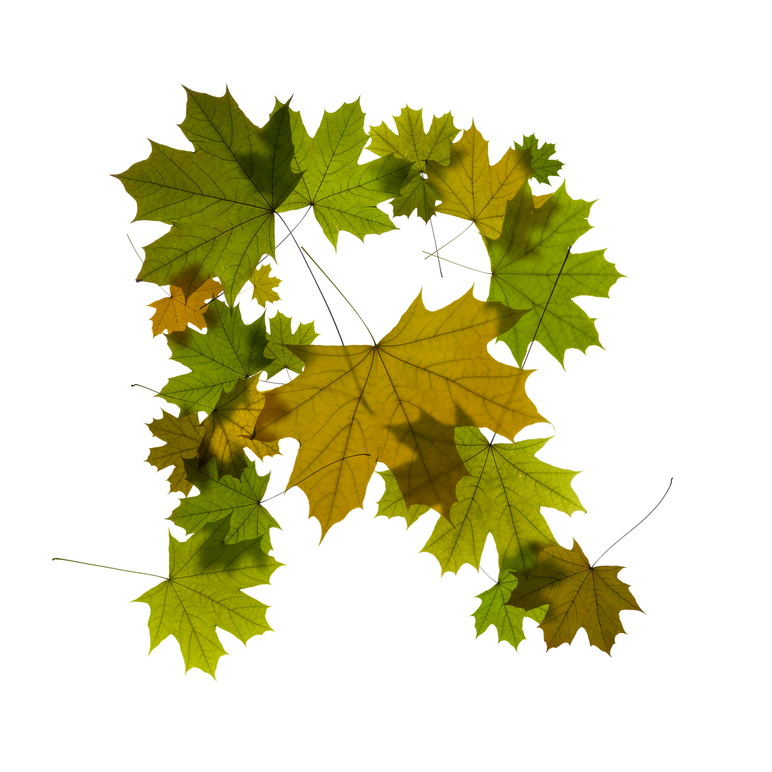 Print on Demand: Maple Leaves Alphabet Graphic Illustrations By NREY - Image 19
