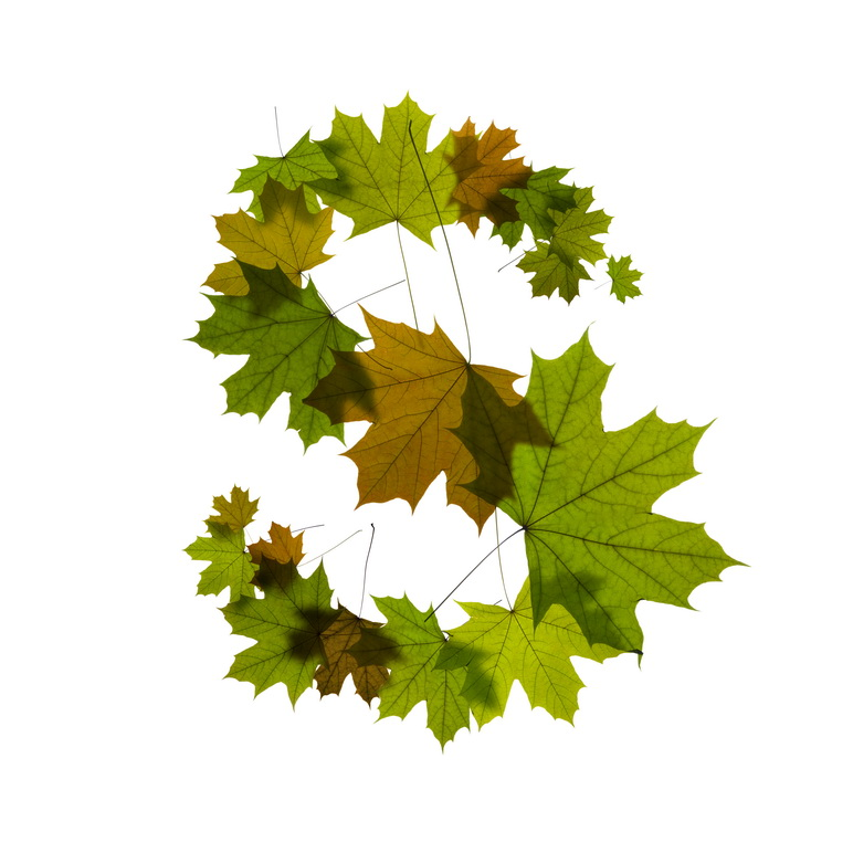 Print on Demand: Maple Leaves Alphabet Graphic Illustrations By NREY - Image 20