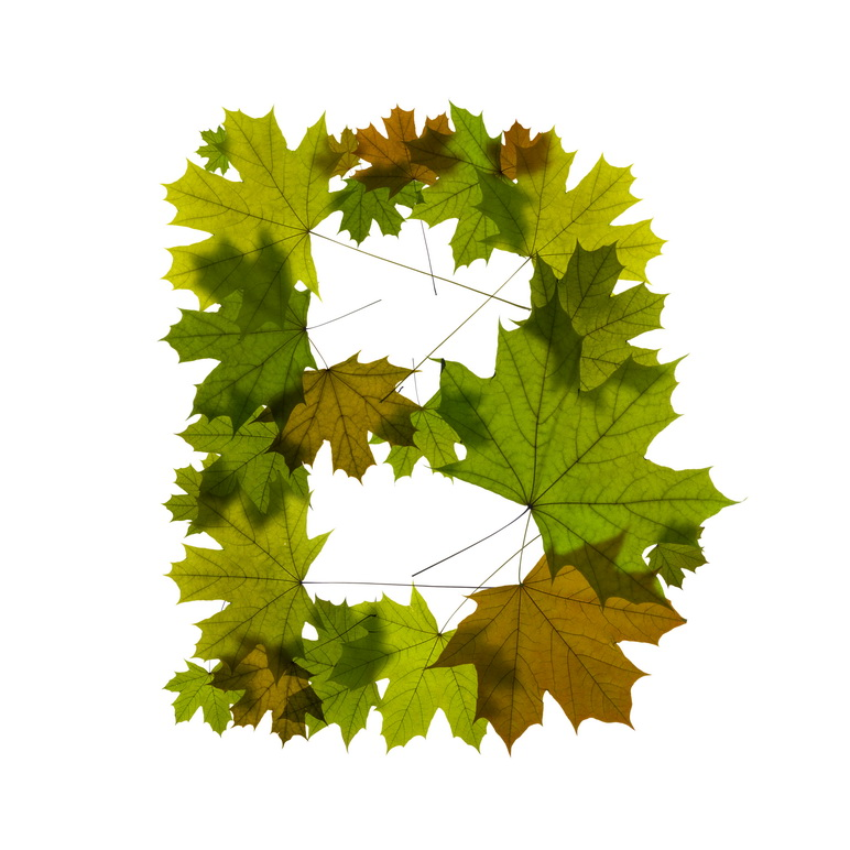 Print on Demand: Maple Leaves Alphabet Graphic Illustrations By NREY - Image 3