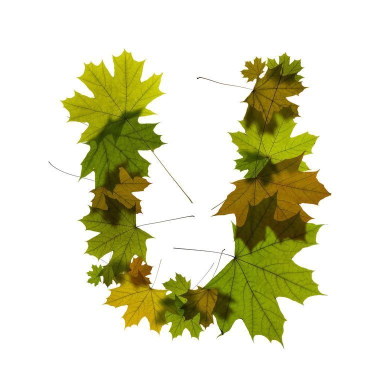 Print on Demand: Maple Leaves Alphabet Graphic Illustrations By NREY - Image 22
