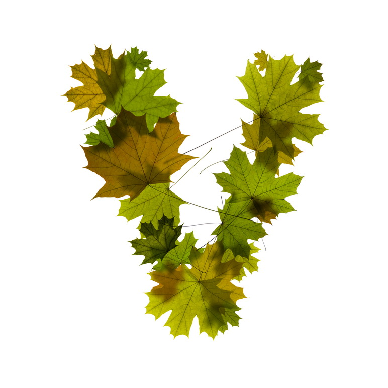 Print on Demand: Maple Leaves Alphabet Graphic Illustrations By NREY - Image 23