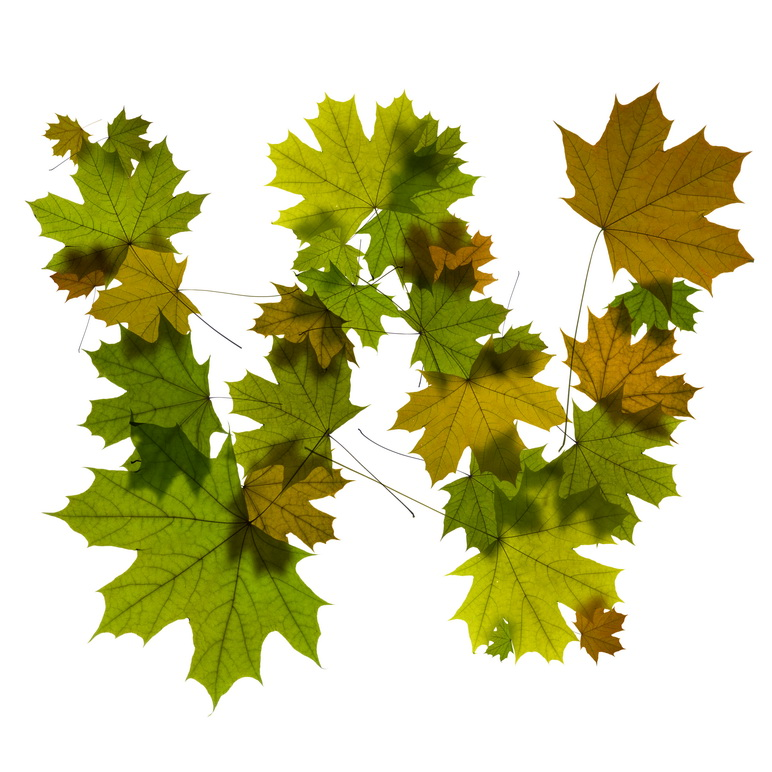 Print on Demand: Maple Leaves Alphabet Graphic Illustrations By NREY - Image 24