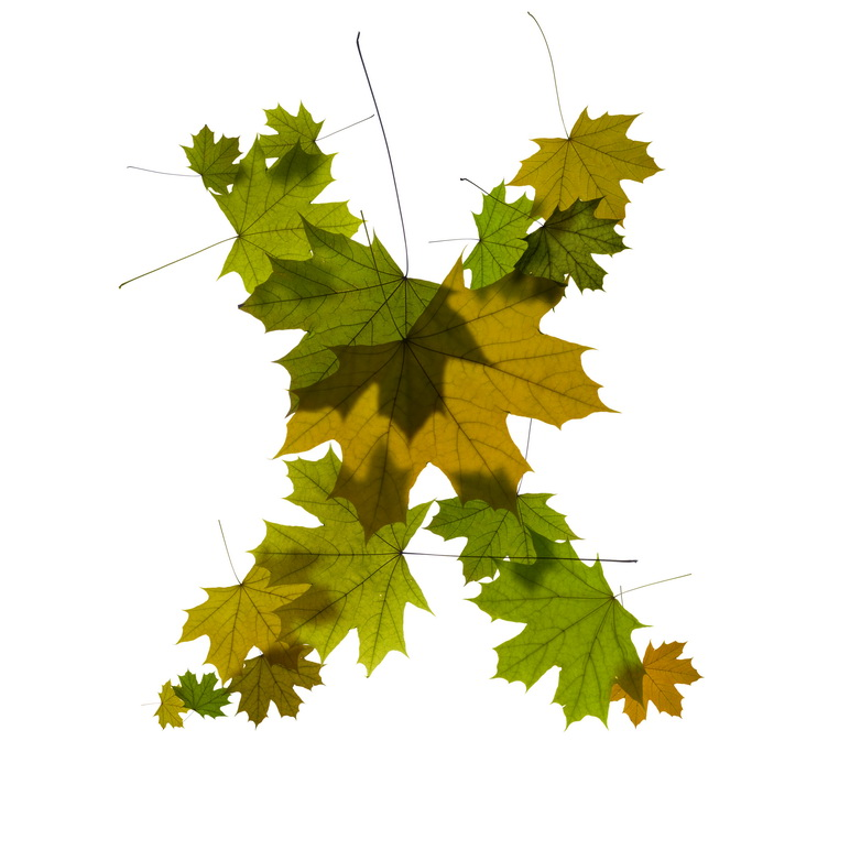 Print on Demand: Maple Leaves Alphabet Graphic Illustrations By NREY - Image 25