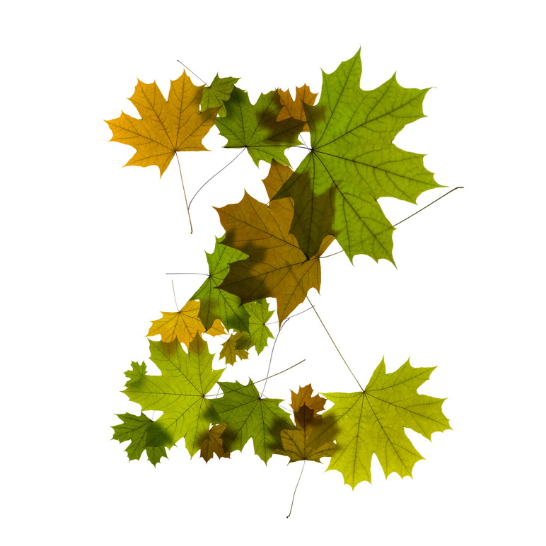 Print on Demand: Maple Leaves Alphabet Graphic Illustrations By NREY - Image 27