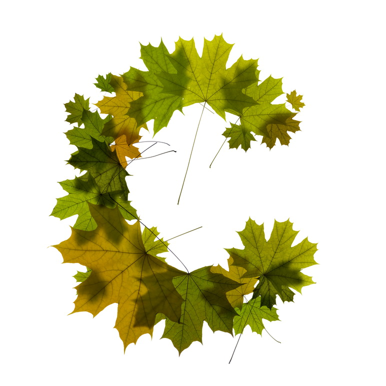 Print on Demand: Maple Leaves Alphabet Graphic Illustrations By NREY - Image 4