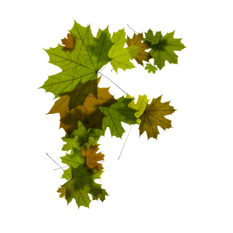 Print on Demand: Maple Leaves Alphabet Graphic Illustrations By NREY - Image 7