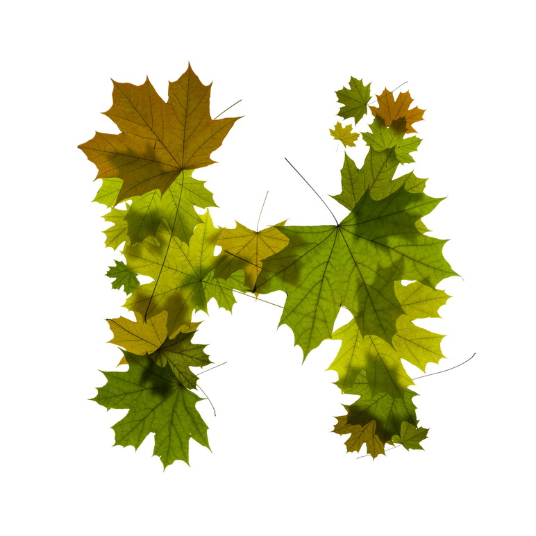 Print on Demand: Maple Leaves Alphabet Graphic Illustrations By NREY - Image 9