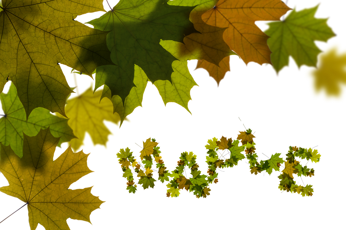 Print on Demand: Maple Leaves Alphabet Graphic Illustrations By NREY