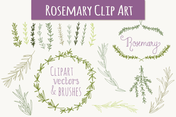 Rosemary Set Graphic Illustrations By The Pen and Brush