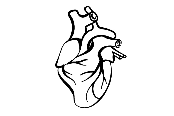 Download Free Anatomically Correct Heart Svg Cut File By Creative Fabrica for Cricut Explore, Silhouette and other cutting machines.