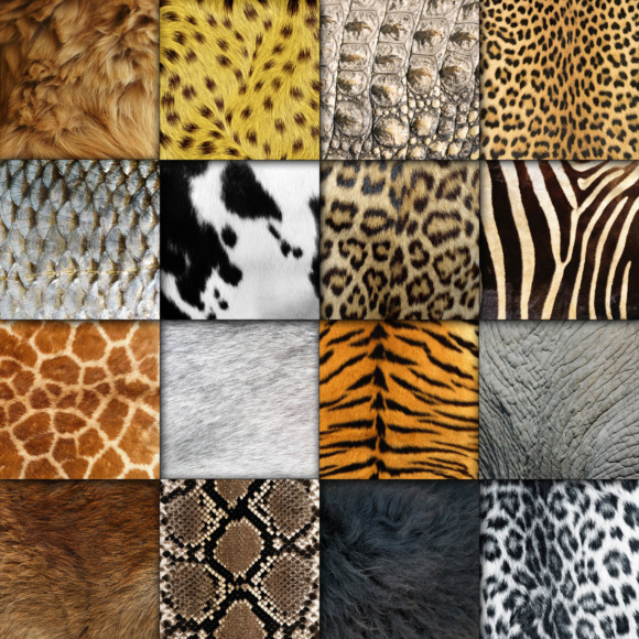 Animal Skin Digital Paper Textures Graphic by ...