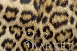 Print on Demand: Animal Skin Digital Paper Textures Graphic Backgrounds By oldmarketdesigns 3