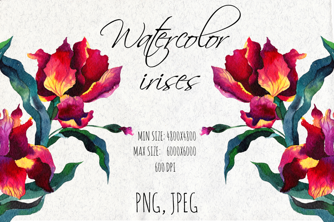 Watercolor Iris Flowers Graphic Illustrations By alisared87