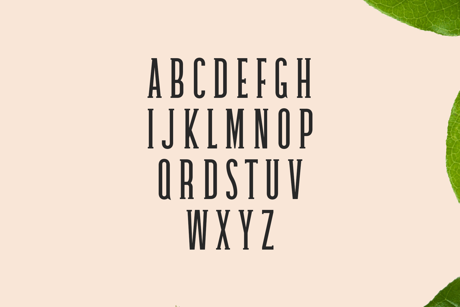 Print on Demand: Galvin Family Pack Slab Serif Font By Creative Tacos - Image 2