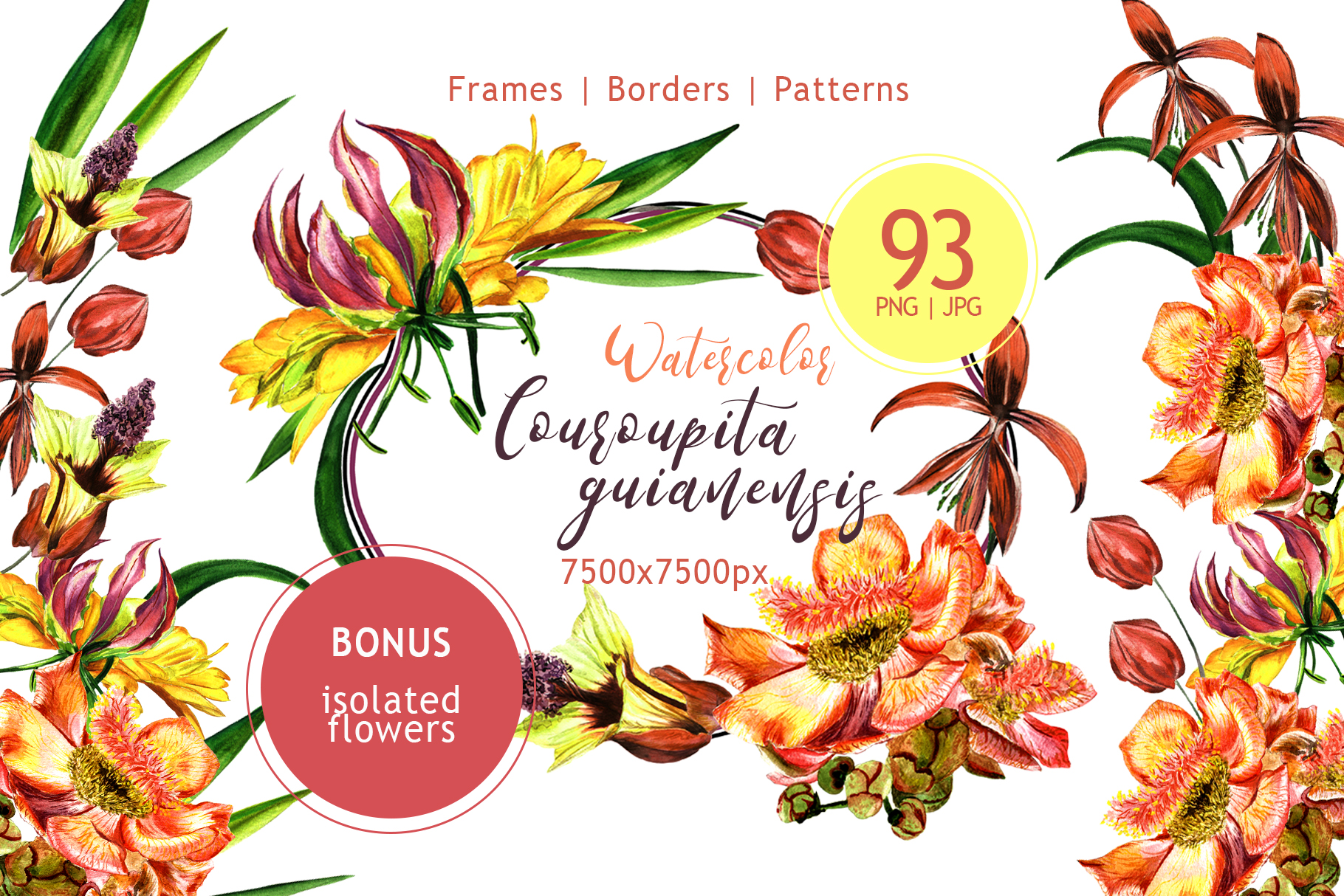 Print on Demand: Couroupita Guianensis PNG Watercolor Set Graphic Illustrations By MyStocks