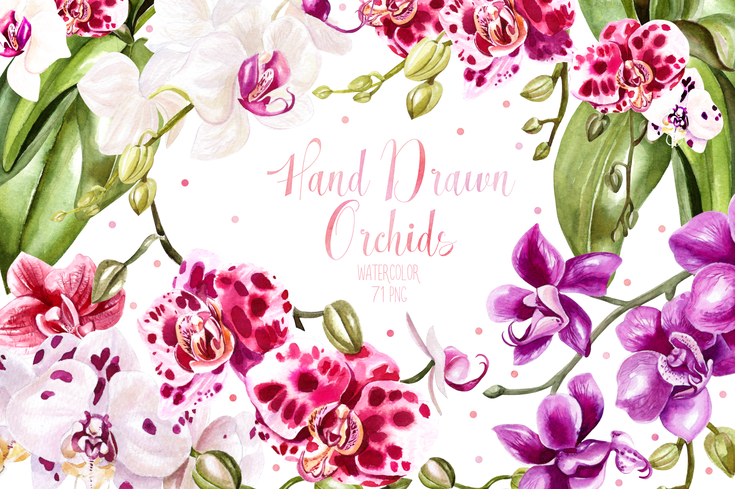Hand Drawn Watercolor Orchids Graphic Objects By Knopazyzy