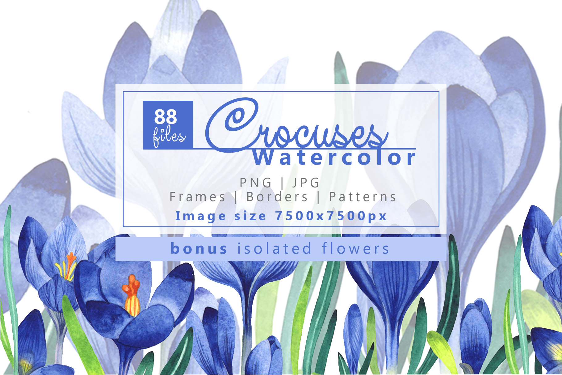 Print on Demand: Light Blue Crocuses PNG Watercolor Set Graphic Illustrations By MyStocks