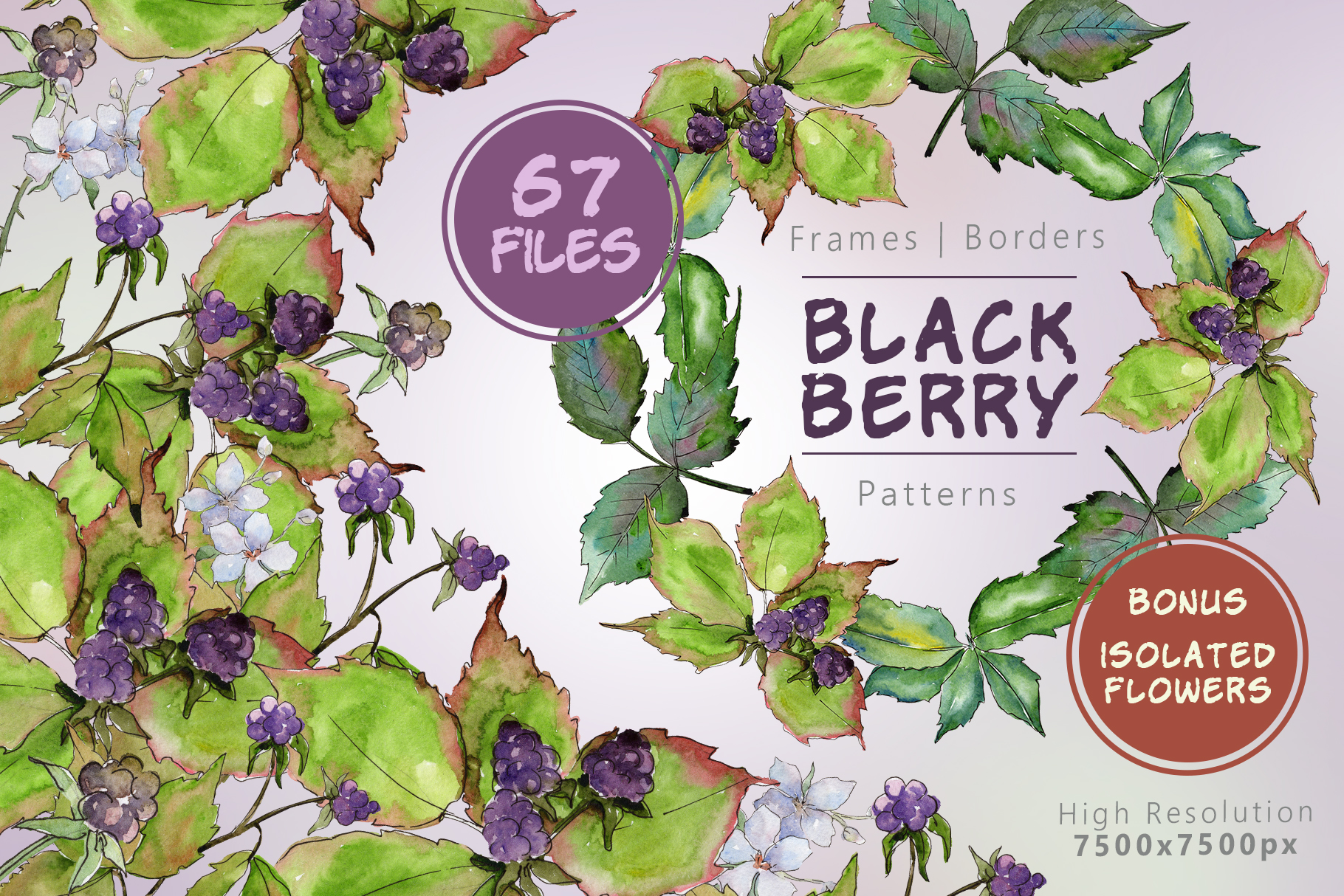 Print on Demand: Sweetly Blackberry JPG Watercolor Set Graphic Illustrations By MyStocks