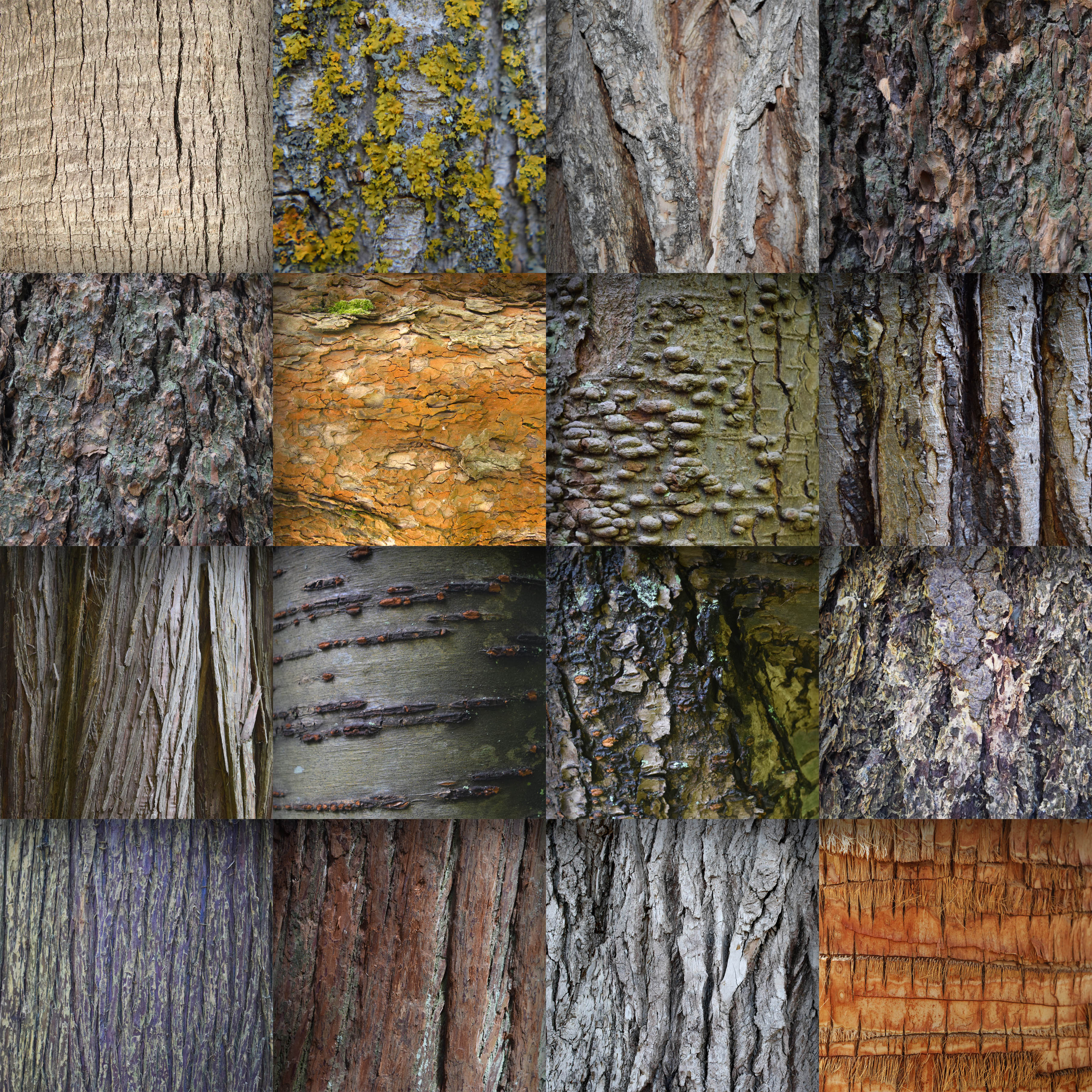Tree Bark Textures Digital Paper Graphic by ...