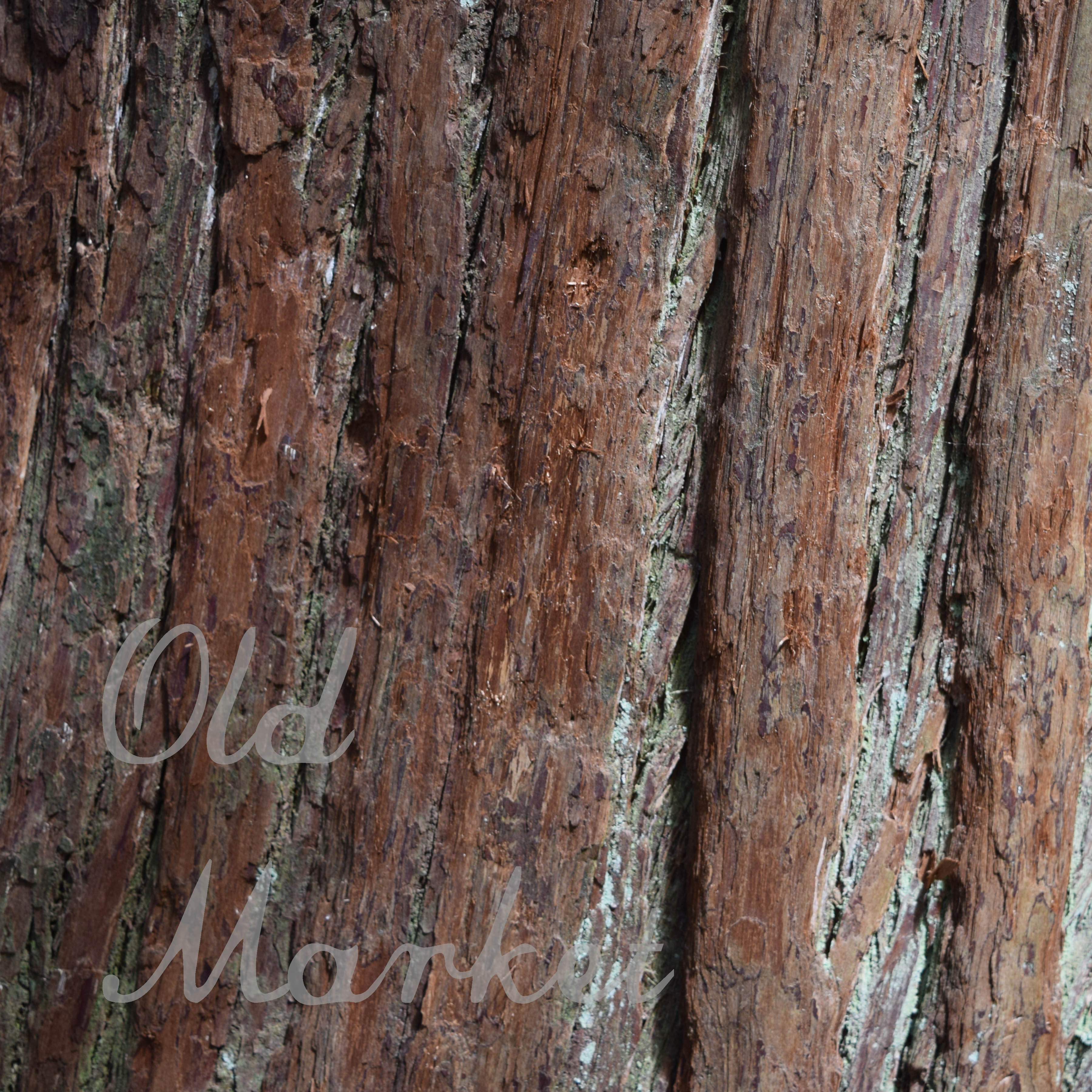 Tree Bark Textures Digital Paper Graphic By oldmarketdesigns Image 3