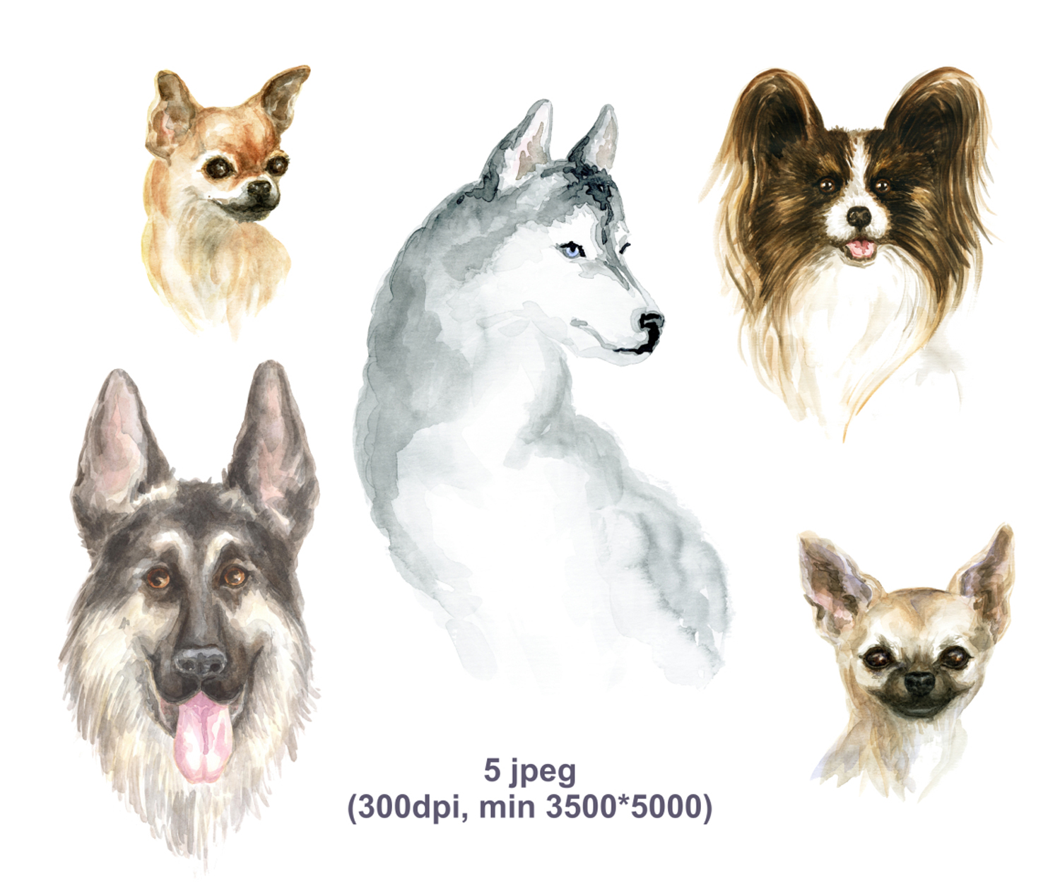 Print on Demand: Hand Drawn, Watercolor Portraits of Dogs Graphic Illustrations By Olga Belova - Image 2