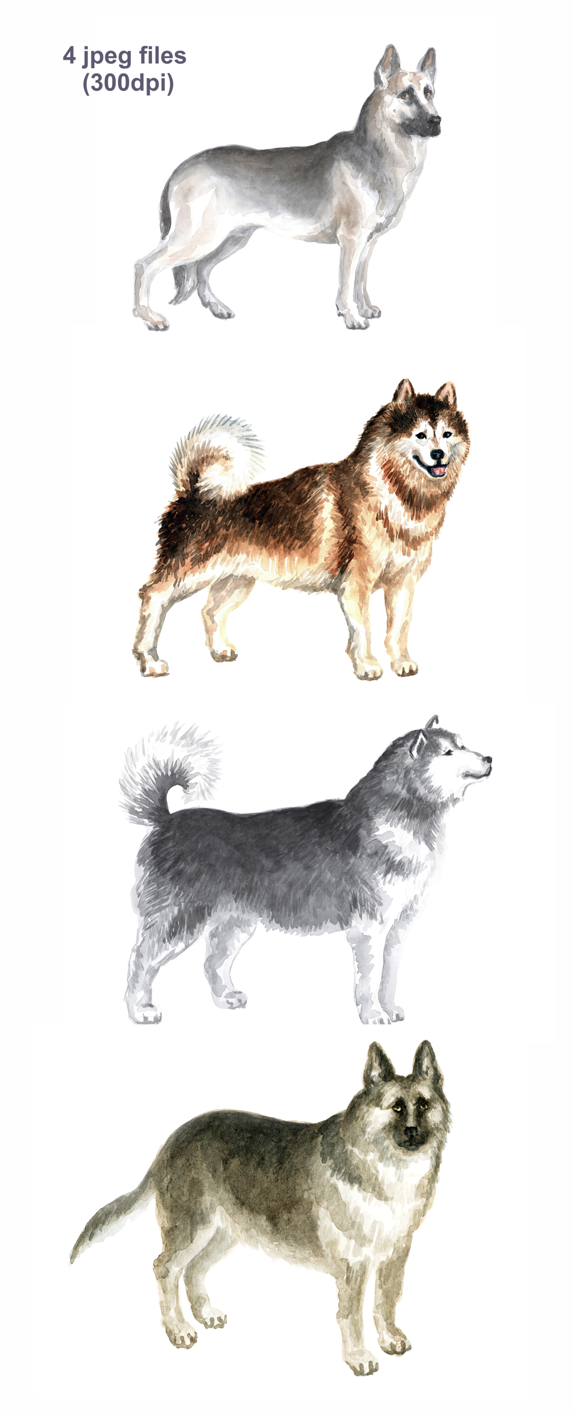 Print on Demand: Watercolor Dogs Graphic Illustrations By Olga Belova - Image 2