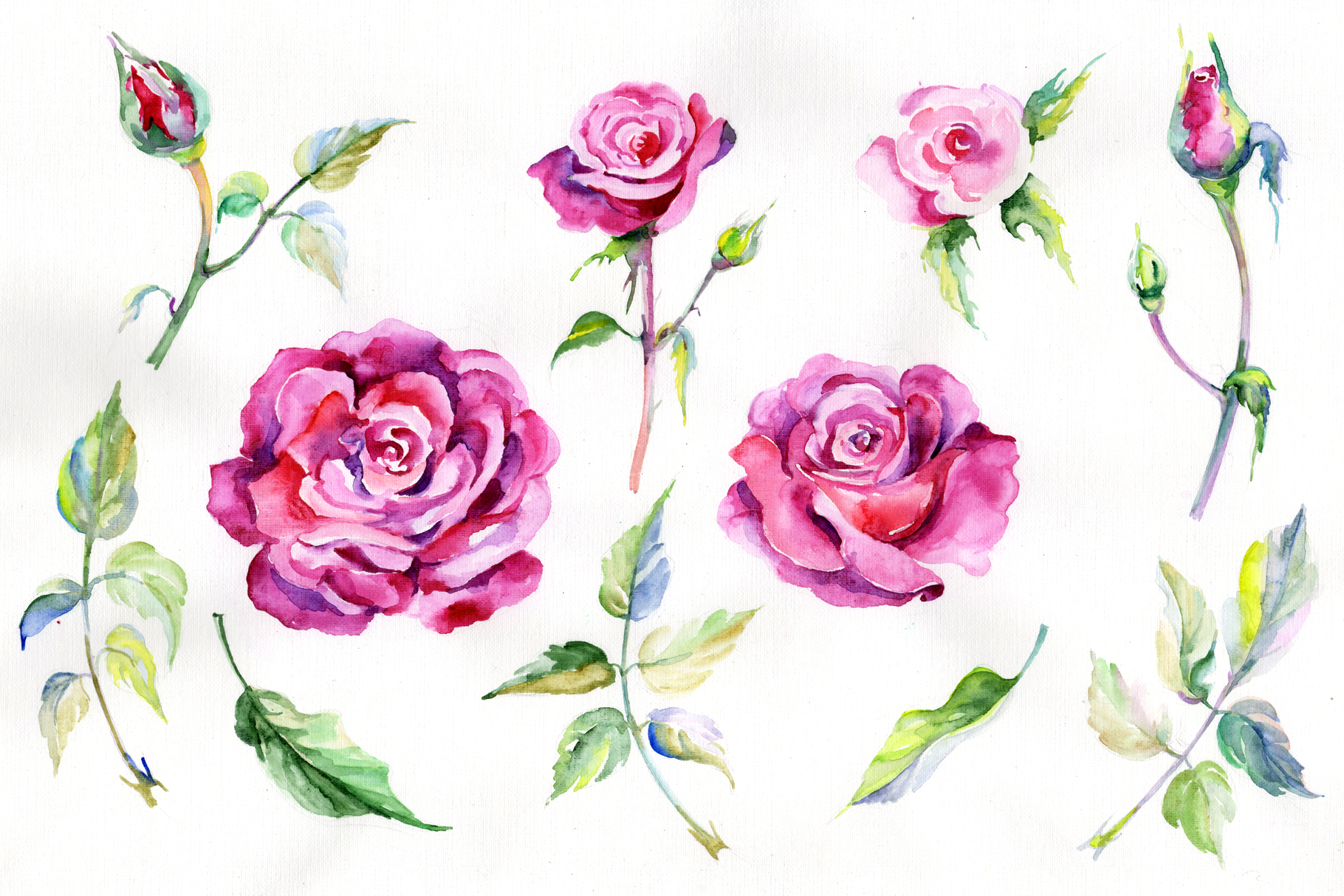 Print on Demand: Wildflower Pink Roses Watercolor Set Graphic Illustrations By MyStocks