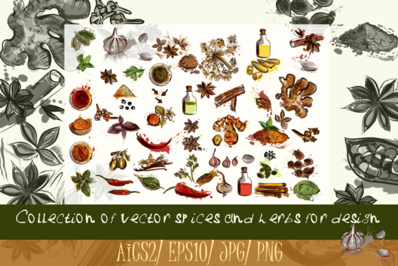 Collection of Spices Graphic Illustrations By fleurartmariia
