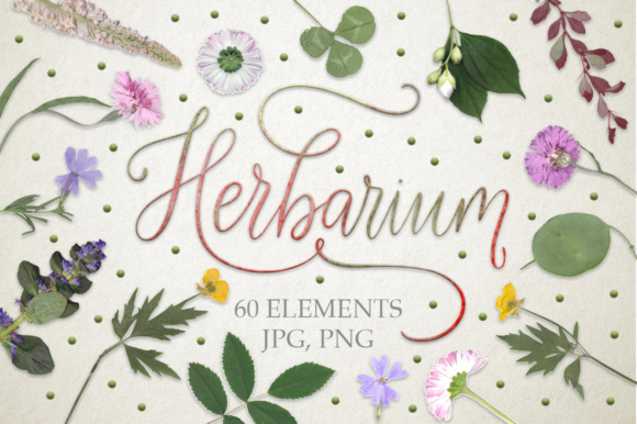 Download Free Herbarium 60 Real Herbarium Elements Graphic By Red Ink for Cricut Explore, Silhouette and other cutting machines.