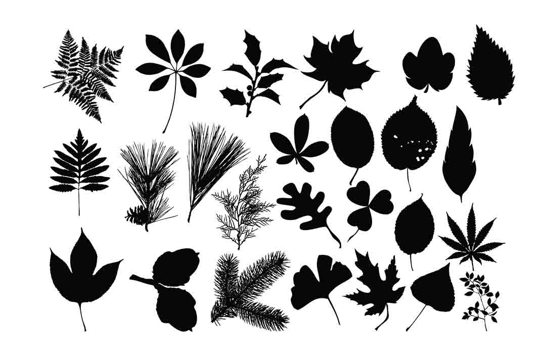 Download Free Leaves Silhouette Graphic By Retrowalldecor Creative Fabrica for Cricut Explore, Silhouette and other cutting machines.
