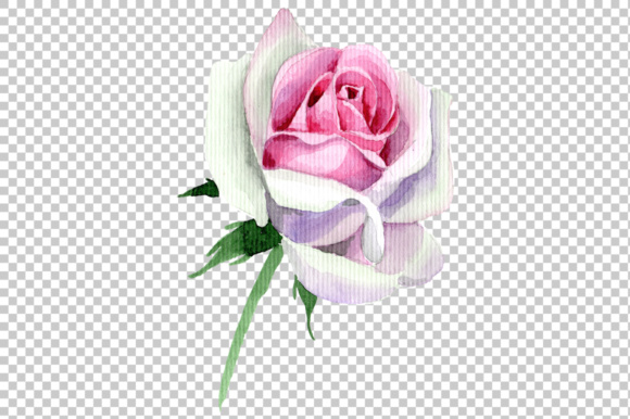 Pink Rose Watercolor Flower Png Graphic By Mystocks Creative Fabrica
